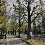 この週末は慶應日吉キャンパスのイチョウ並木&B級グルメを食べに「日吉」へGO!